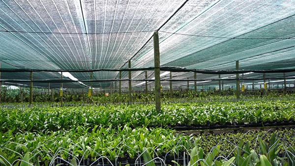 Có thể tìm mua lưới che nắng trên các website thương mại Thái Lan
